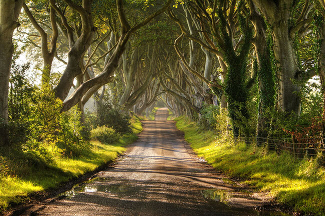 Dark-Hedges-along-Bregagh-Road-in-Northern-Ireland
