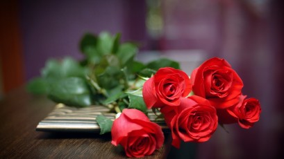 Red-Rose-Wallpaper-HD-pictures