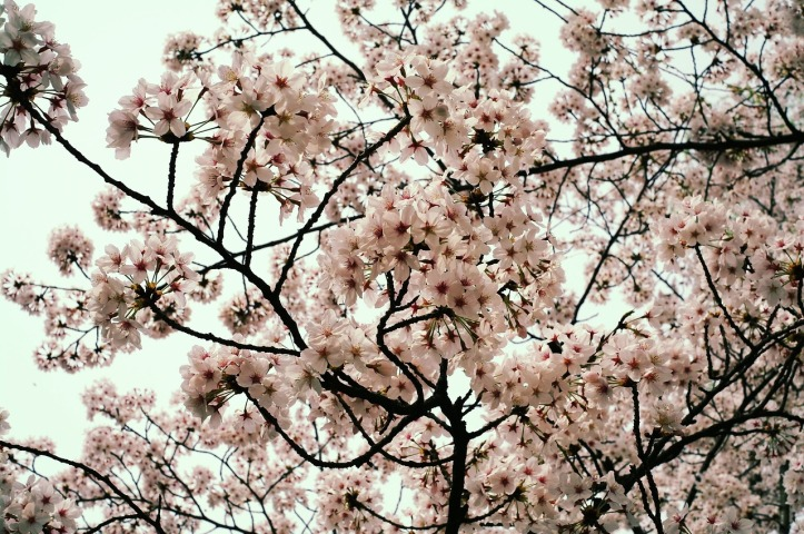 flowers-1340766_1280
