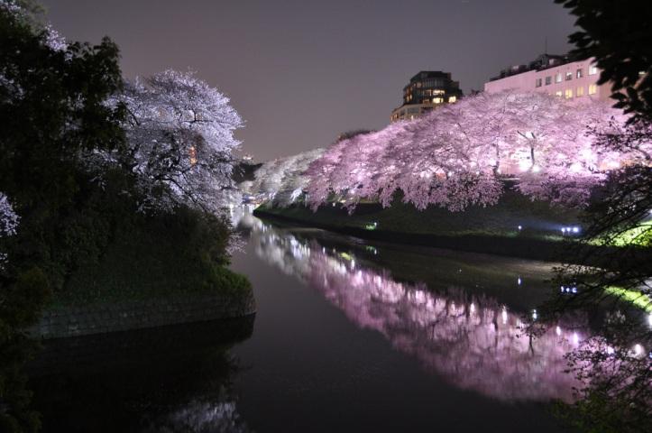 sakura-cheery-blossom-sky-spring-tree-pink-nature.-1