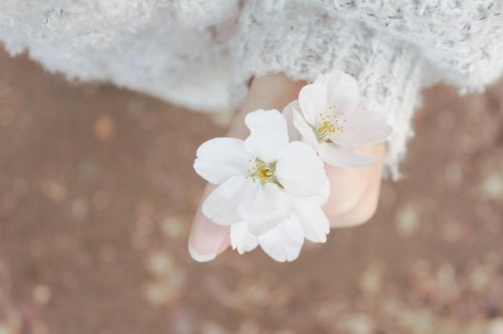 spring-cherry-blossom-spring-flowers-sakura-flowers