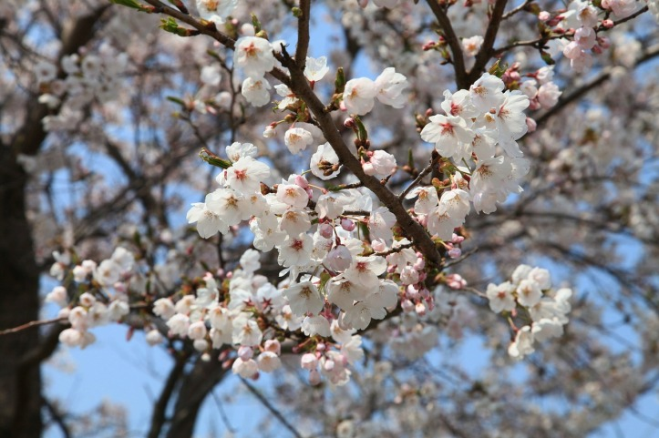 spring-flowers-709602_1280