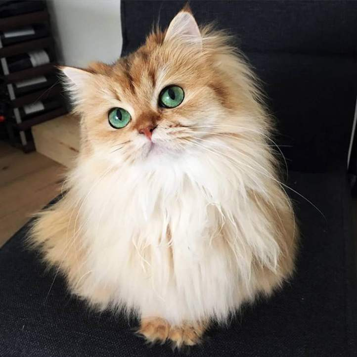 most-beautiful-cats-world-2